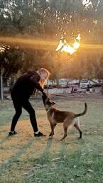 dog training perth